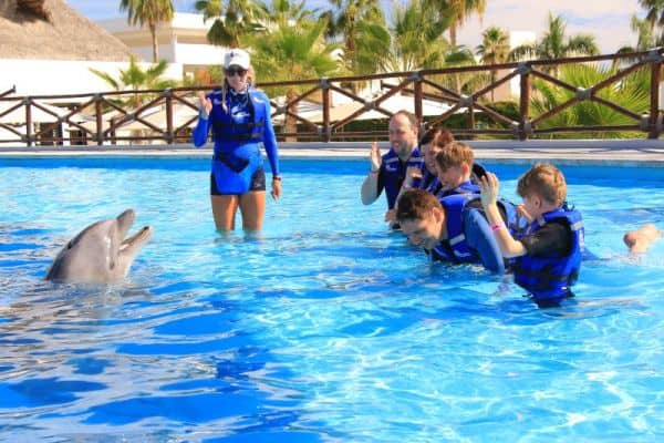 Cabo Adventures Dolphin Experience