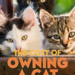 In the process of finding and adopting a wonderful adult cat, I learned a lot about the costs of owning a cat, from purchase to future expenses.