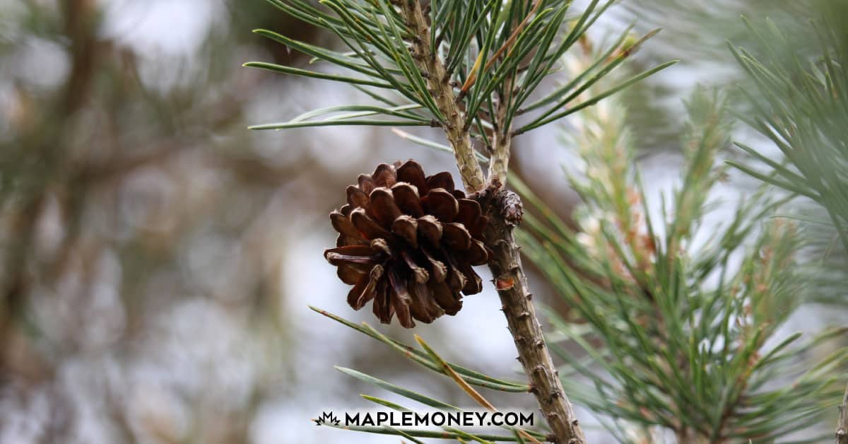 Pinecone Research Review: Become a Product Influencer and Make Money with Online Surveys