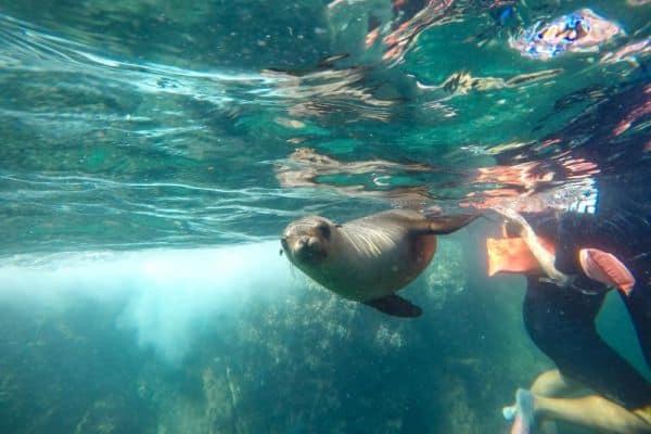 Sea of Cortez Sea Lions